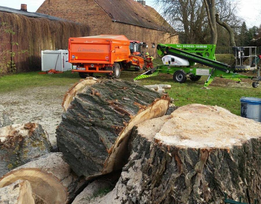 Baumstümpfe nach Fällung