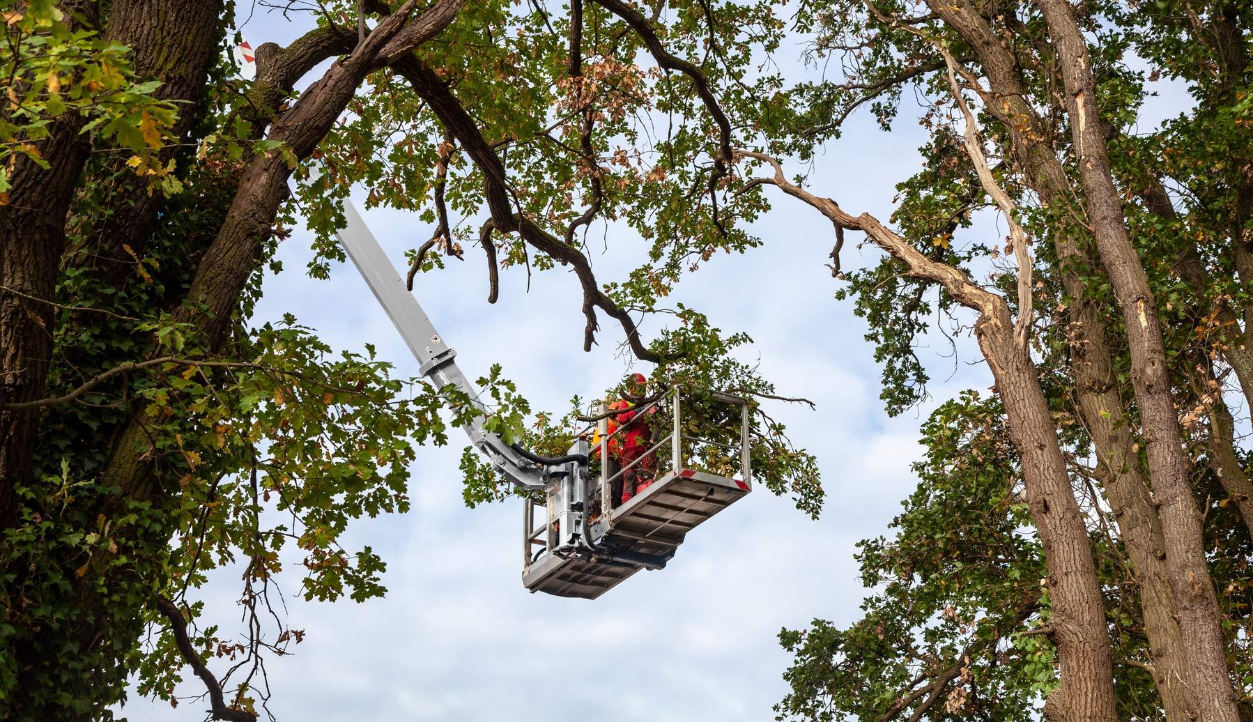 Baumpflege Team Cottbus