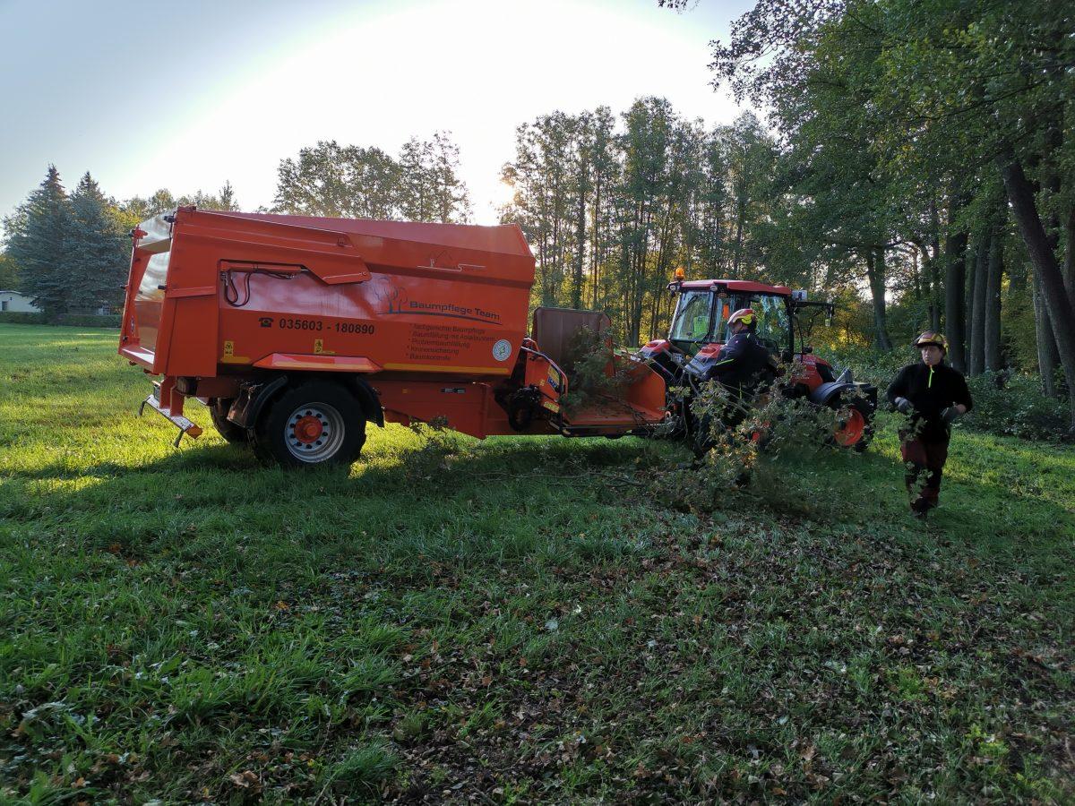 Altholzentsorgung im Spreewald