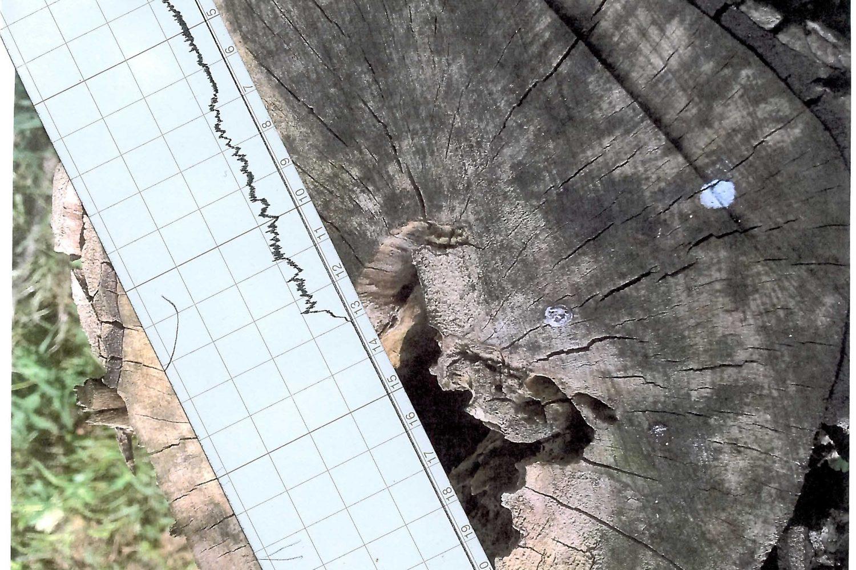 Messung und Baumkontrolle