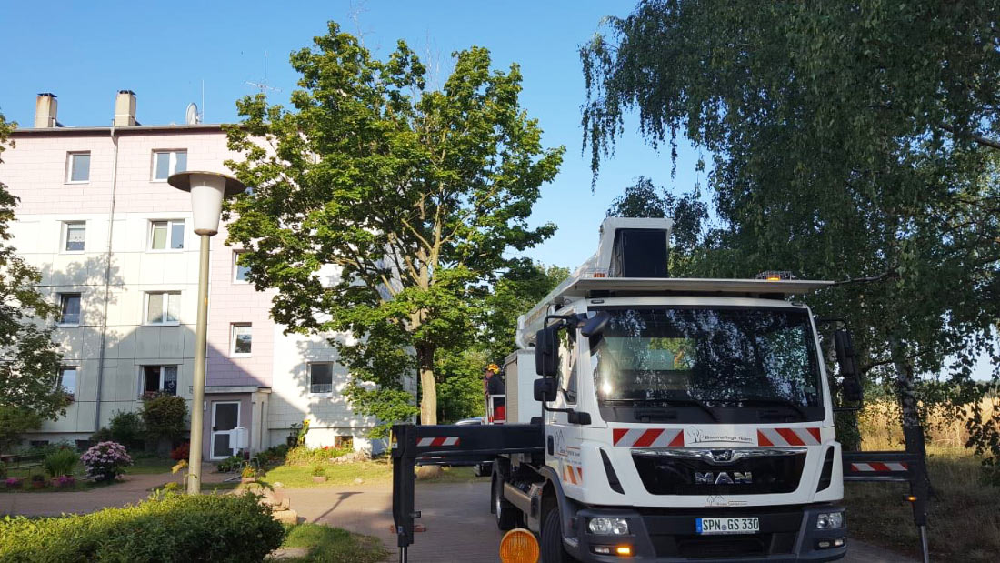 Baumpflege im Stadtgebiet