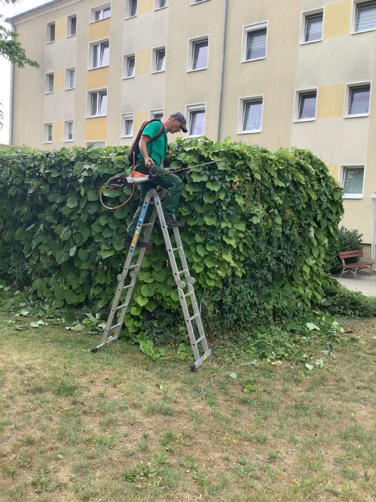 Gartenpflege in Lübbenau