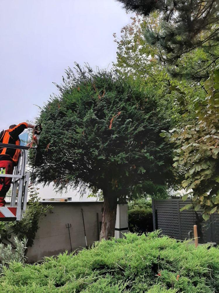 Baumzuschnitt in Cottbus