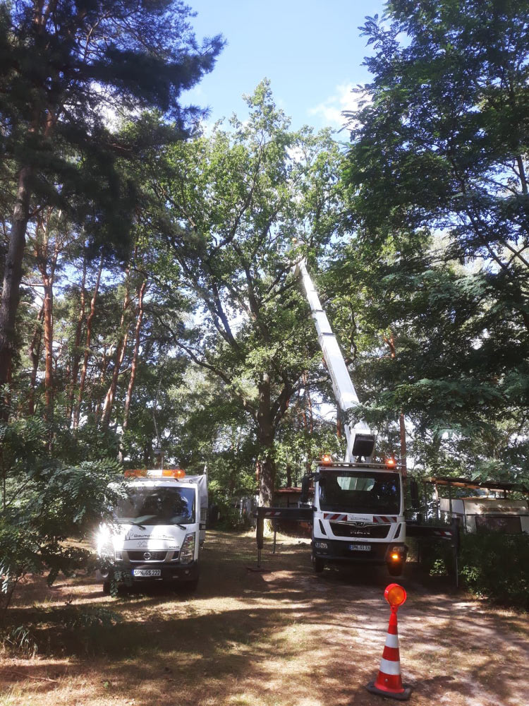 Baumpflegeteam mit Hebekran