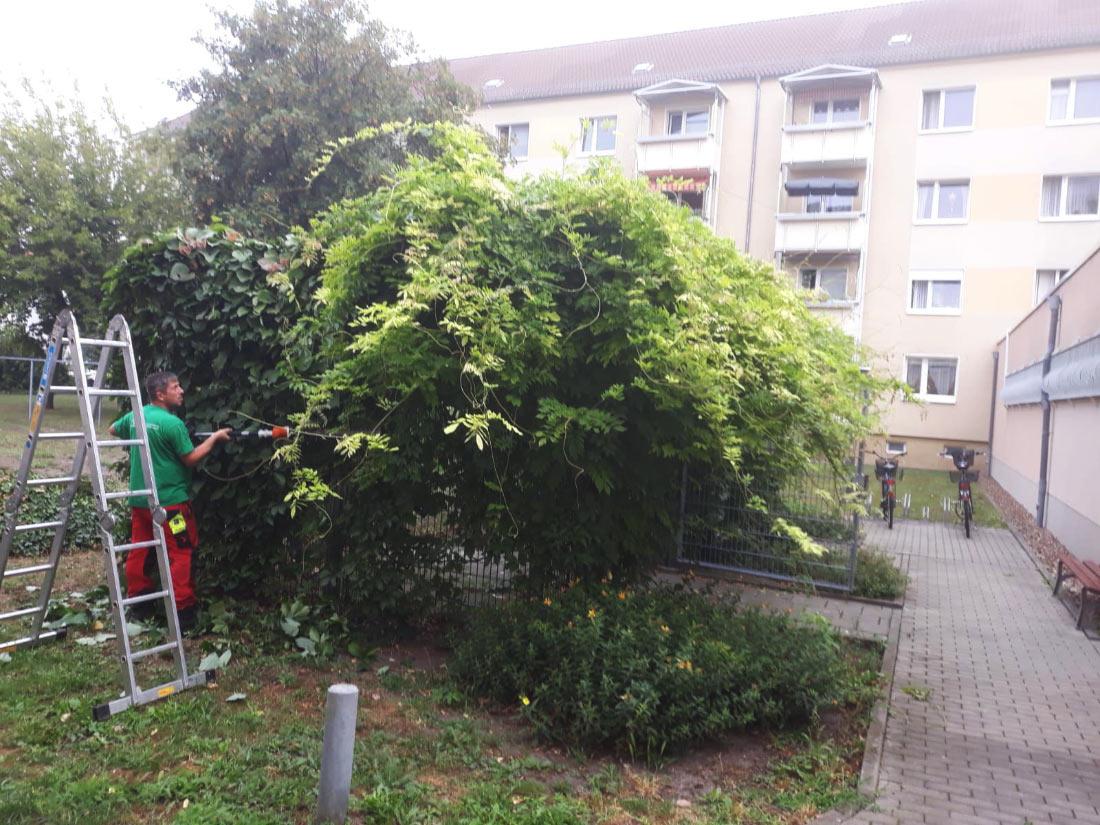 Gartenpflege am Neubau