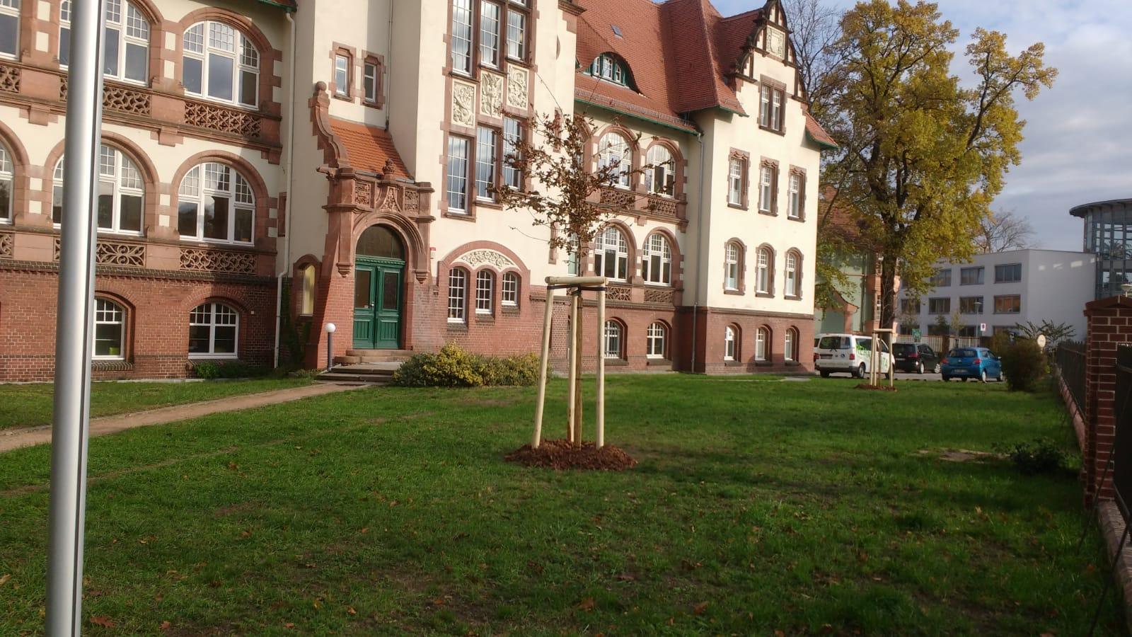 Baumpflanzung in cottbuser Grünanlage