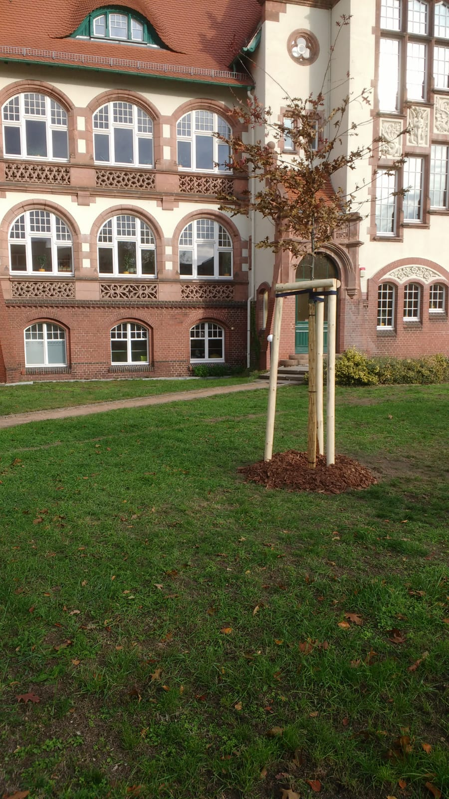 Professionelle Baumpflanzung Gebäude in Cottbus