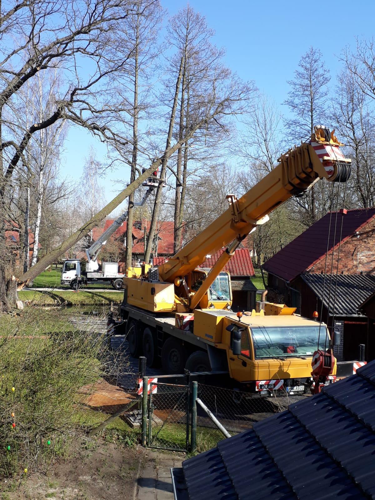 Schadensvermeidung durch präventive Totholzentferung