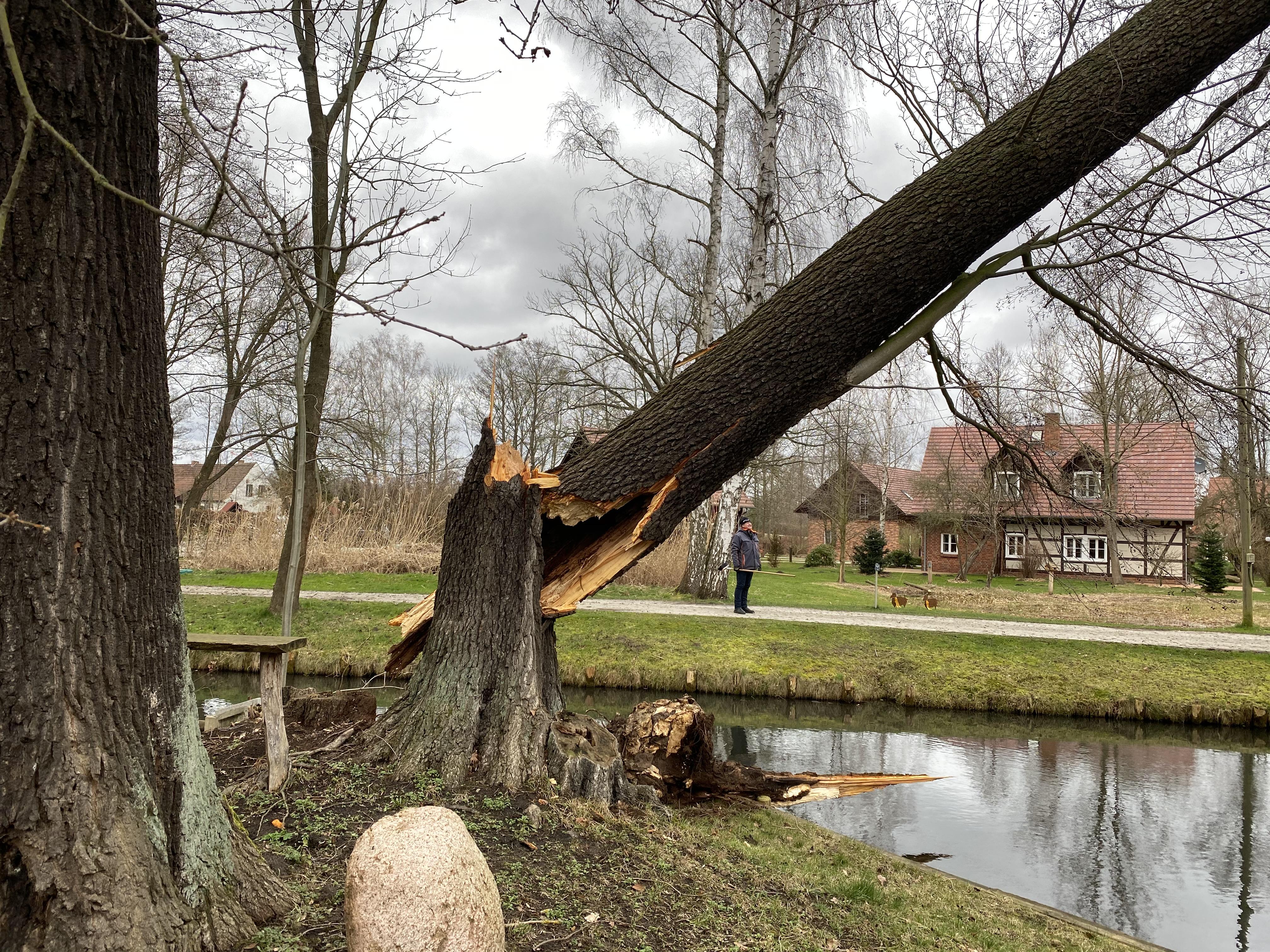 Gefahrbaumfällung gebrochener Hölzer und Totholzentfernung
