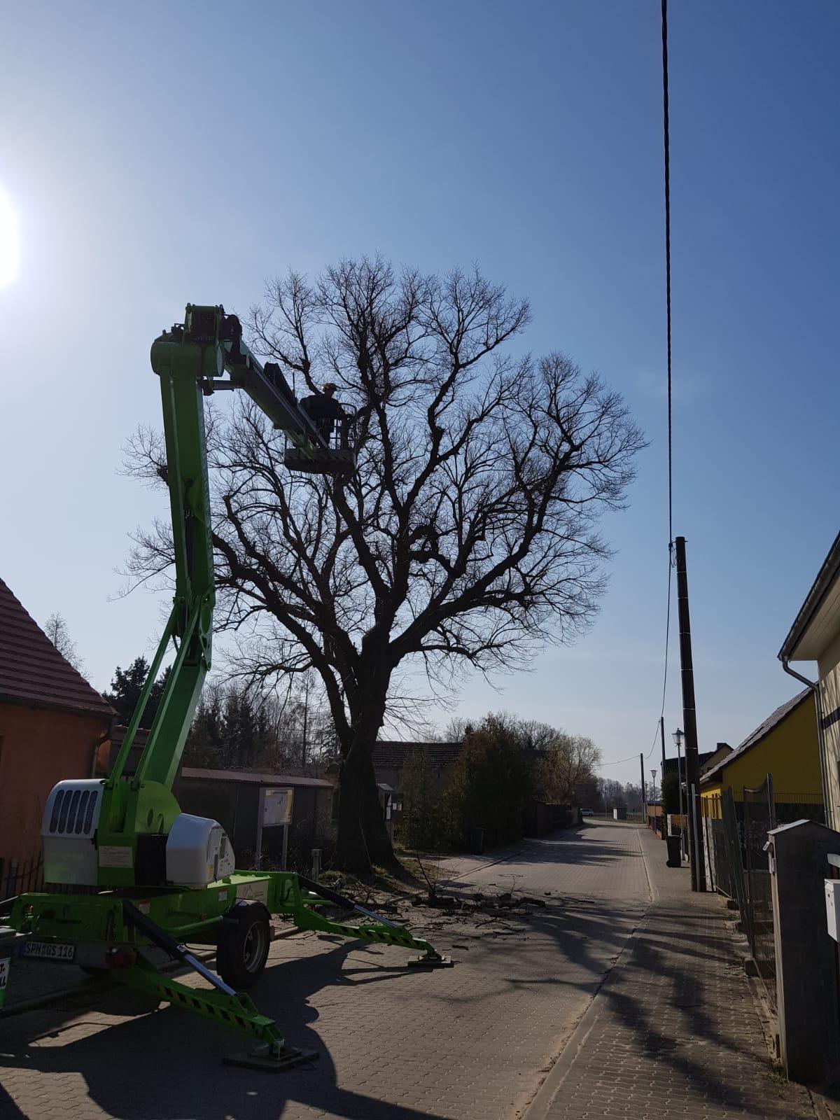 Baumpflege mit Hilfe einer Hebebühne