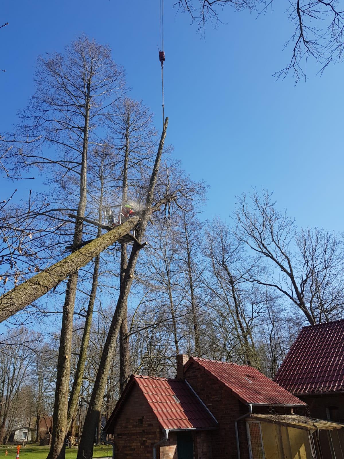Gefahrbaumfällung mit Hilfe von zusätzlicher Krantechnik