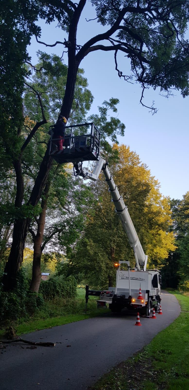Todholzentnahme an Bäumen in Lieberose
