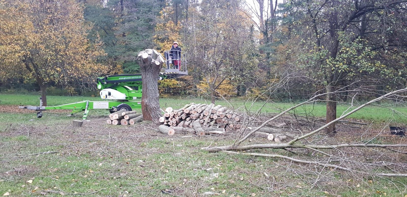 Baumfällung in Müschen