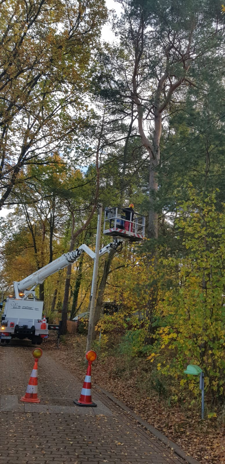 Baumpflege Goyatz