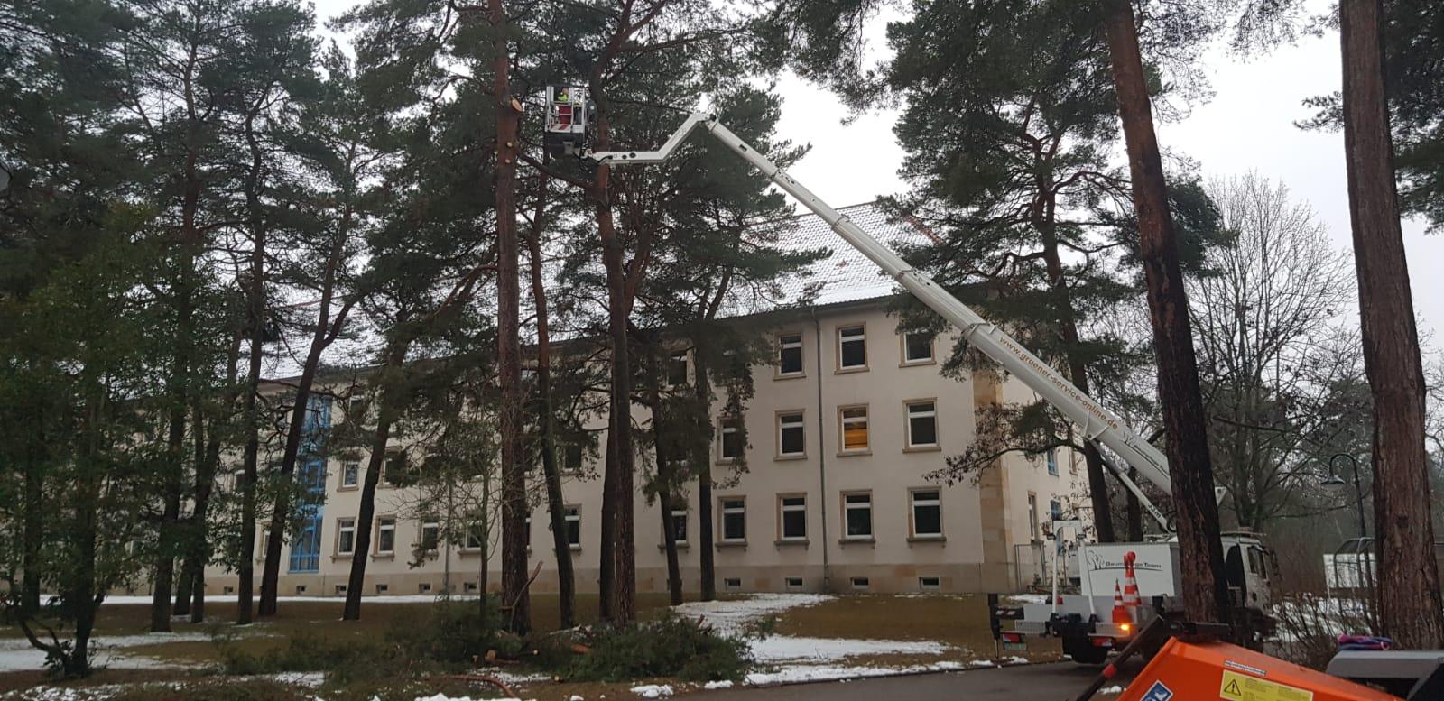 Baumpflege in Cottbus / Havarieeinsatz