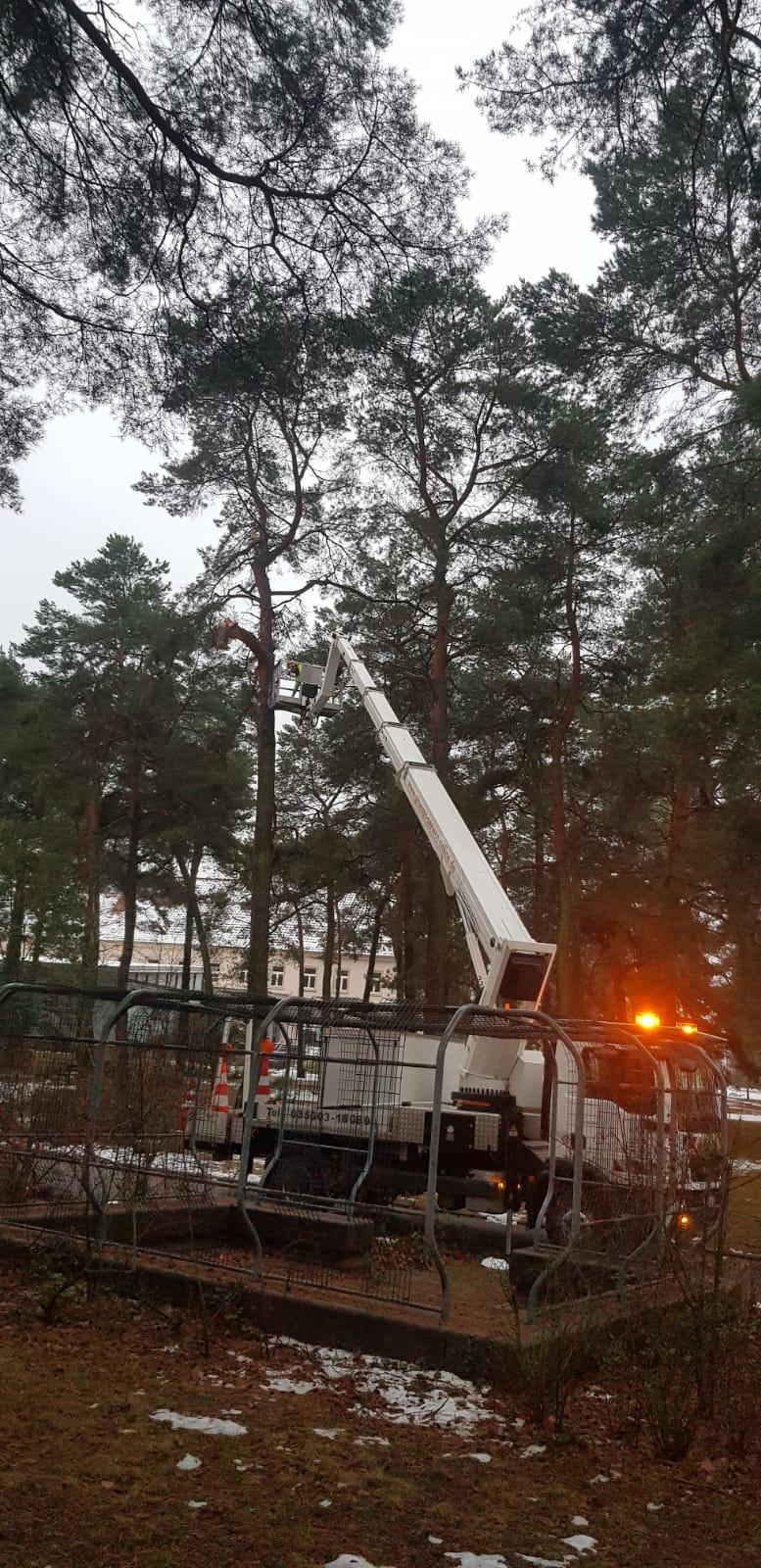 Baumfplege in Cottbus nach Schneefall