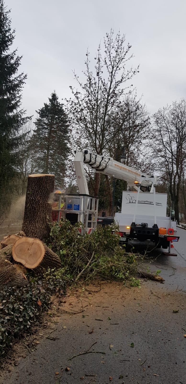 Baumfällung in Lieberose