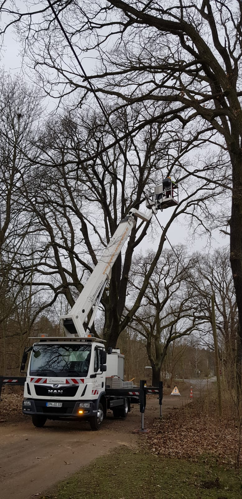 Baumpflege in Lieberose