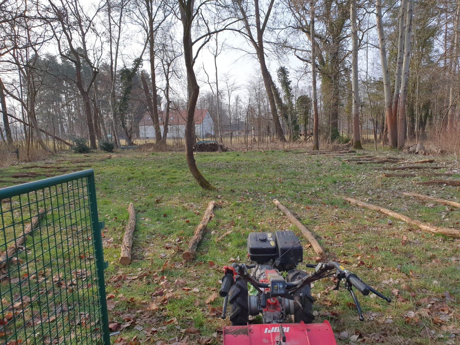 Neugestaltung Rasenfläche in Burg (vorher)