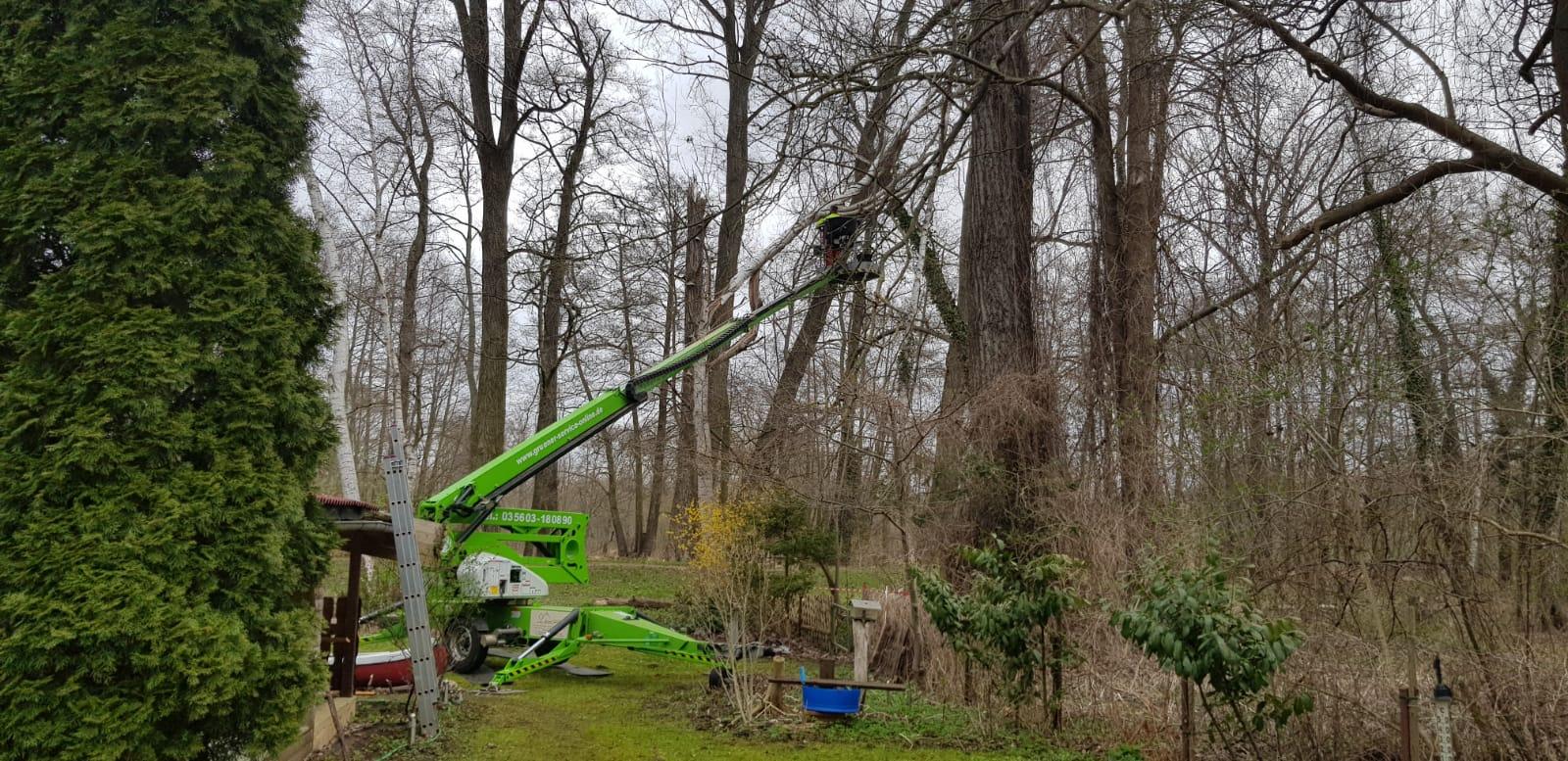 Baumpflege in Burg mit kleiner Hebebühne