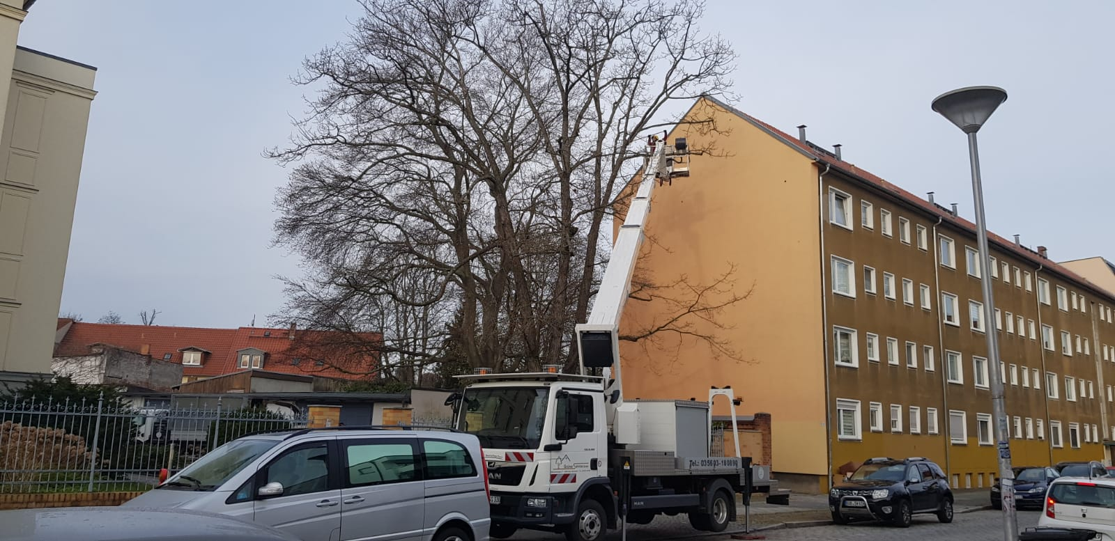 Totholzbeseitigung in Cottbus