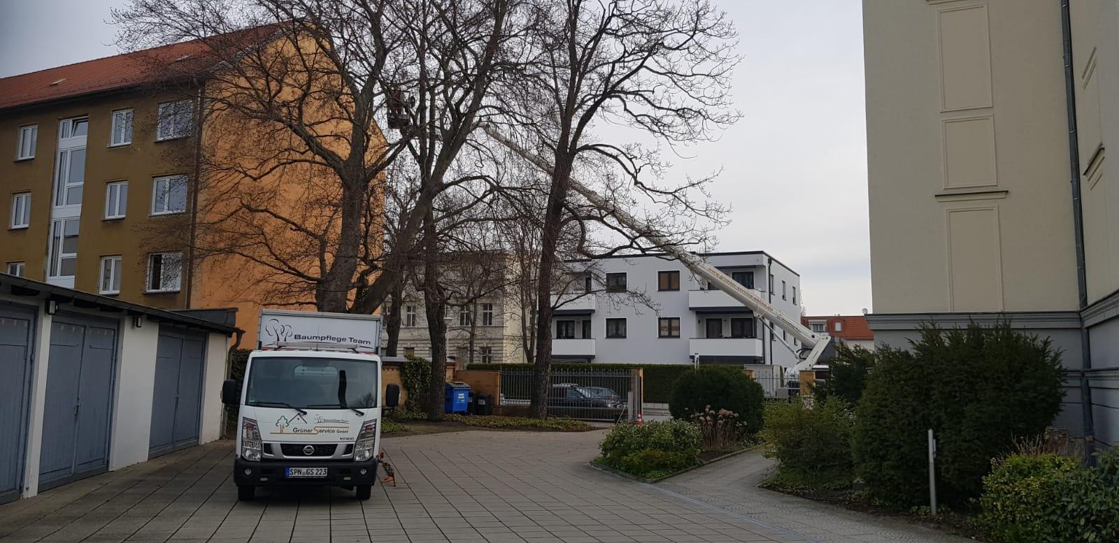 Baumpflege in Cottbus