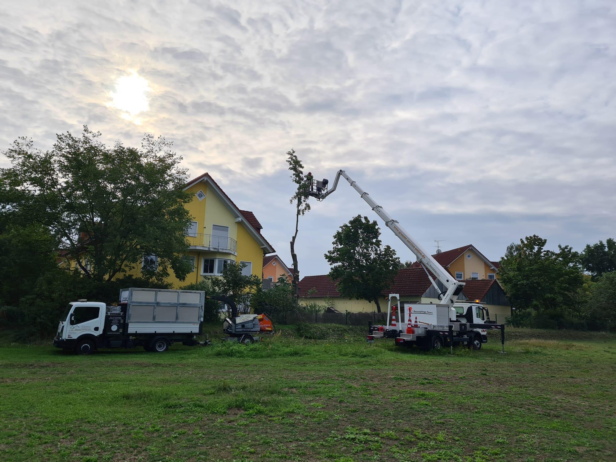 Baumfällarbeiten Werben